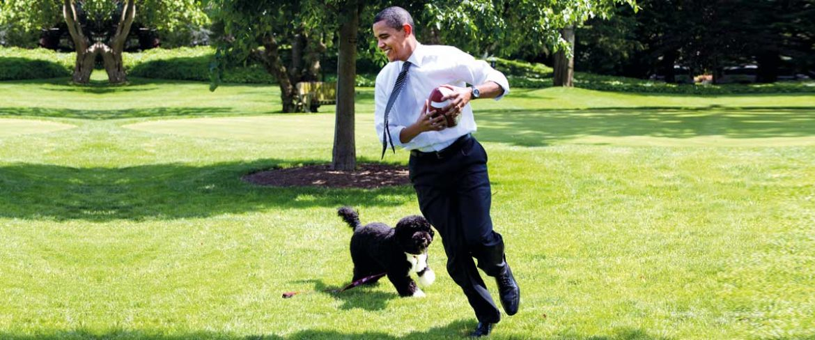 President Barack Obama, with the family dog Bo, playing football on the South Lawn of the  White House May 12, 2009.  White House Photo by Pete Souza.  This official White House photograph is being made available for publication by news organizations and/or for personal use printing by the subject(s) of the photograph. The photograph may not be manipulated or used in materials, advertisements, products, or promotions that in any way suggest approval or endorsement of the President, the First Family, or the White House.