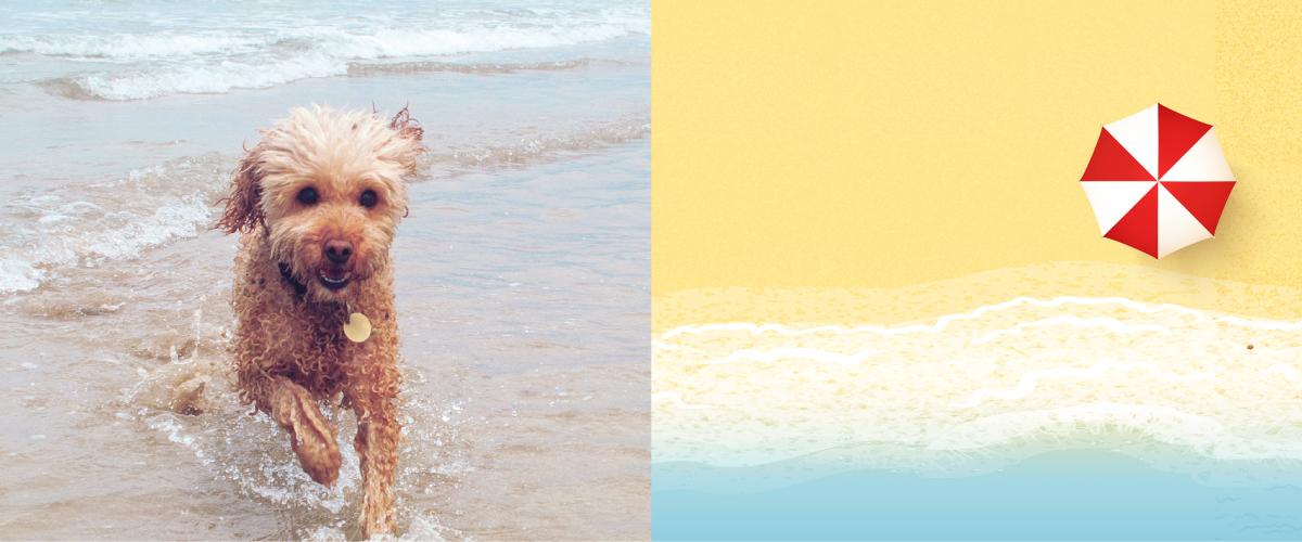 BIG_dogs_on_beach